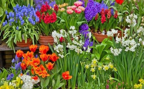 Работаем с цветущими растениями в феврале месяце