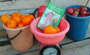 Выращиваем помидоры на даче без минеральных удобрений (видео)