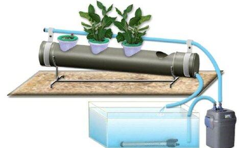 Как правильно использовать гидропонику для выращивания овощей и цветов?