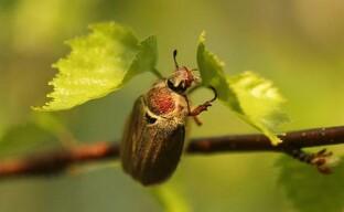 Самые распространённые насекомые-вредители