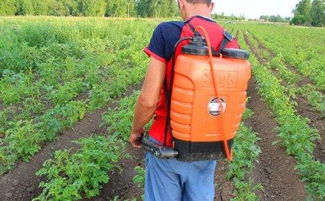 Выбор химических средств, уничтожающих колорадского жука, но безопасных для человека
