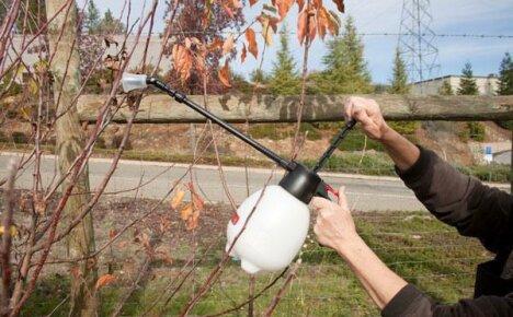 Сроки проведения обработки сада мочевиной с медным купоросом весной