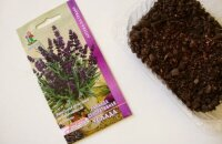 Как вырастить лаванду из семян: секреты всхожести и тонкости посева