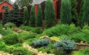 Использование хвойных растений в ландшафтном дизайне