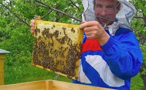 Как самостоятельно приготовить тыквенный мед дома