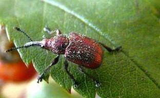 Защита плодовых деревьев от насекомых-вредителей