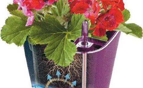 Надежные помощники для цветолюбов – горшки с автополивом