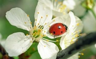 Полезные насекомые в природном земледелии