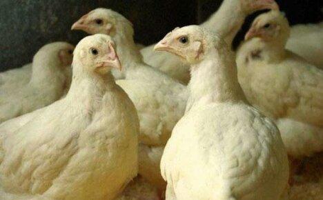 Комбикорм для цыплят и кур бройлеров