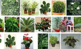 Тенелюбивые комнатные растения: богатый выбор цветоводов