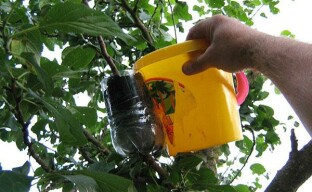 Три способа размножения плодовых деревьев