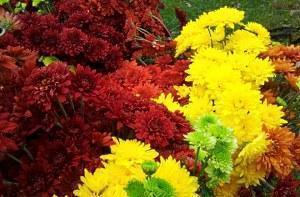Каталог цветы в саду и огороде 27
