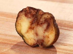 фитофтороз картофеля - как бороться