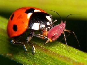 Полезные насекомые сайта и огорода