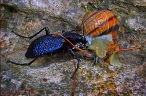 Полезные насекомые для огорода