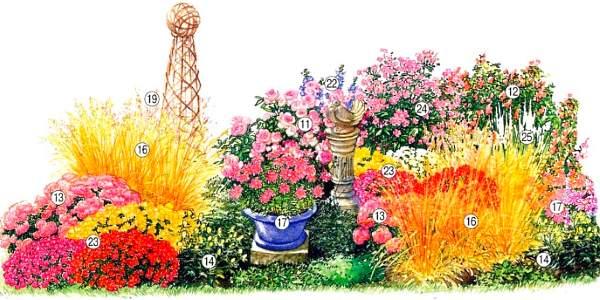 названия многолетних цветов