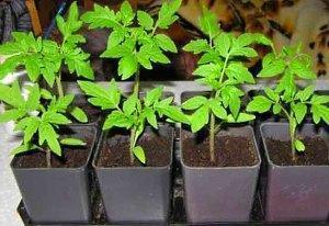 Энерген для семян и рассады - инструкция, как пользоваться, видео
