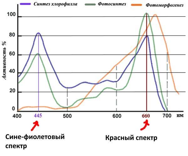 Влияние спектра освещения на рост растений