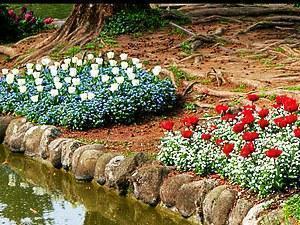 цветы перед прудом