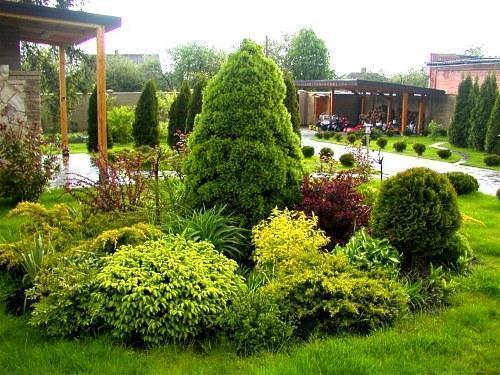 фото клумбы из хвойных растений