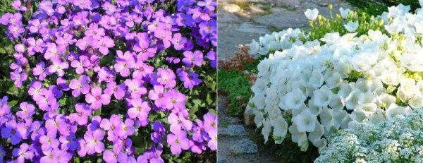 Названия цветов для клумб
