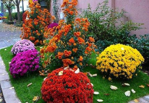 Цветы на клумбе цветущие до осени