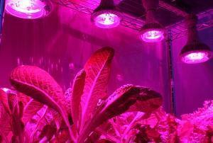 Лампы для мини-огорода