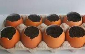 яичные горшочки