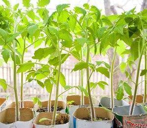 Удобрения для рассады - помидор, капусты, огурцов, томатов