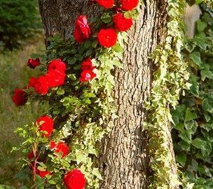 цветок вокруг дерава