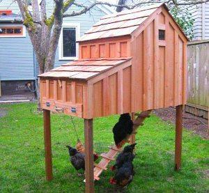 Как построить курятник на даче своими руками