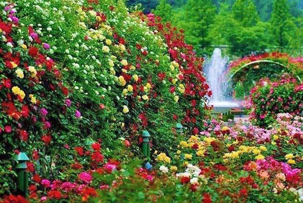 Буйство розового цветения