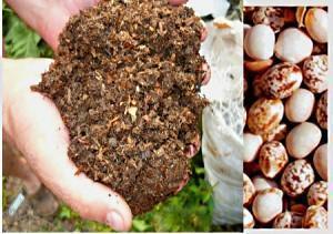 лучшее удобрение для клубники