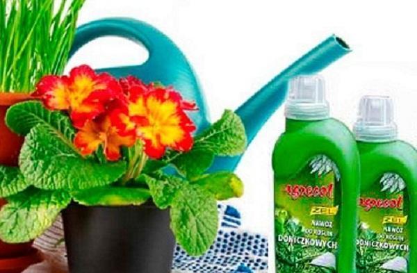 Домашних условиях удобрение комнатных растении