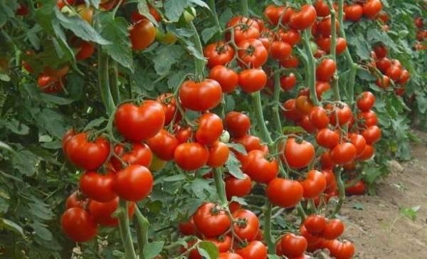 помидоры после отбеливания зубов