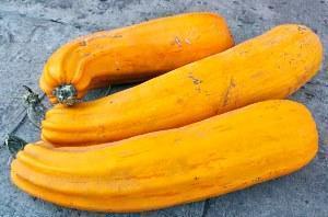 желтые кабачки хорошо хранятся