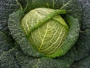 Цветная капуста: выращивание, уход, сорта 29