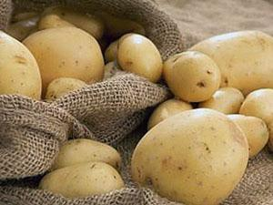 Чистый не зараженный картофель