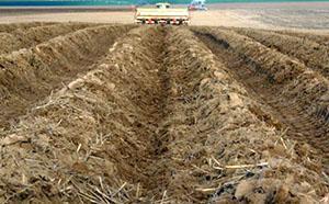 Гребневая посадка картофеля