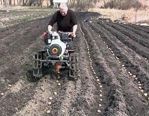 Посадка картофеля с помощью садовой техники