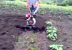 Как делается посадка картофеля мотоблоком с окучником, видео