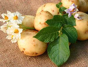 Цветы и клубни картофеля