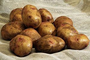 Крупные клубни картофеля