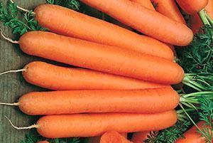 Морковь выращенная по Митлайдеру