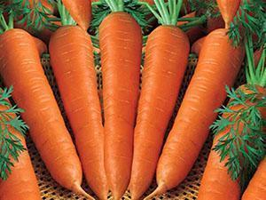Морковь, выращенная в открытом грунте