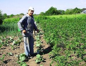 Обработка картофеля против жука