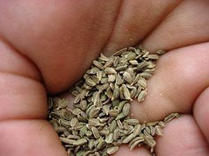 Отбор семян для посева