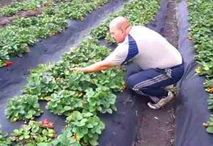 Открытое выращивание