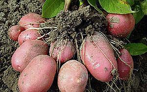 Полноценный урожай