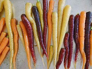 Разноцветная морковь